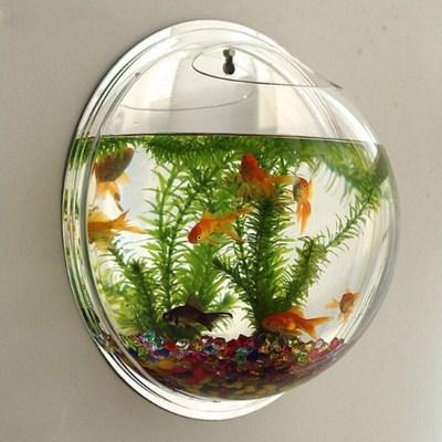 Chiêm ngưỡng những mẫu bể cá cảnh mini treo tường tuyệt đẹp