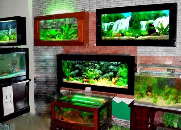 bể cá thủy sinh treo tường